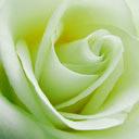 roseverte